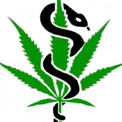 cannabispatienteninfo.de